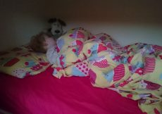 Nap dropping toddler