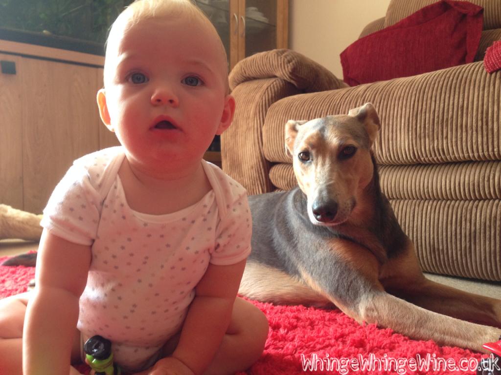 Babies v dogs