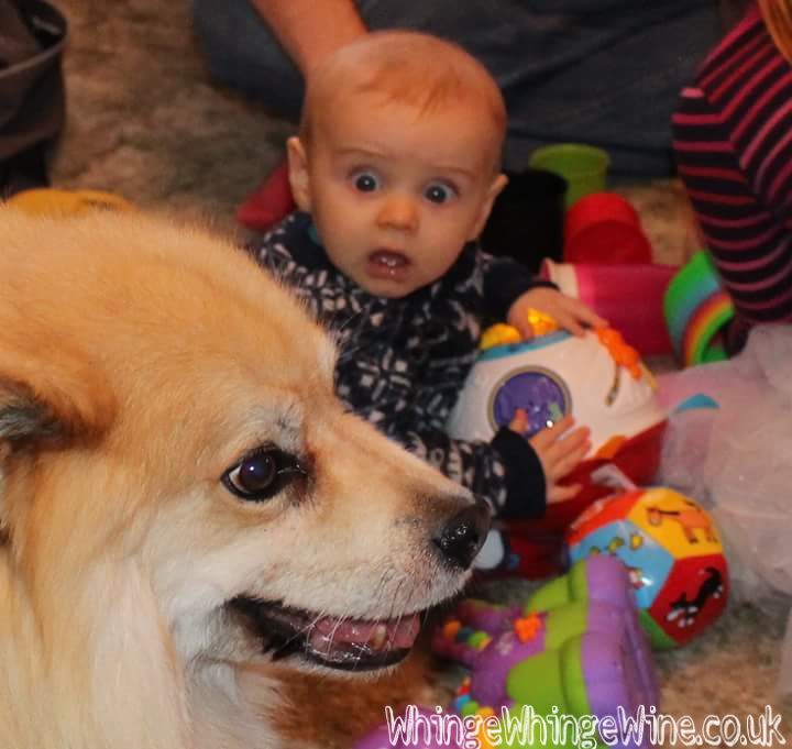 Dogs v babies - similarities between the two