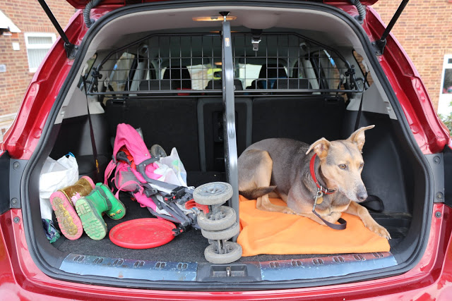 Car dog guard by Travall: A review of a dog guard and divider in a Qashqai