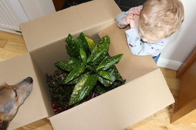 Bloom box club box