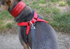 Meg Heath Dog Leads: Bespoke dog harness and car boot safety lead