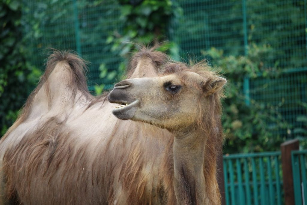 Camel at Paradise Wildlife Park