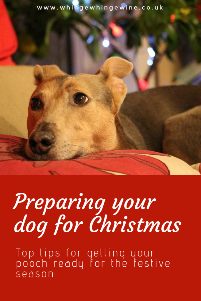 Getting your pooch ready to celebrate the festive season: You might be looking forward to Christmas but you dog probably isn't! It can be a really stressful time for the family pet. Here are 12 tips for preparing your dog for the festive season including foods to avoid and how to cope with visitors. #dogs #christmas #dogsatchristmas