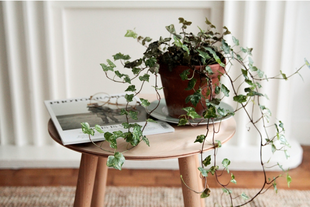 How to get a stunning look for your home on a small budget indoor plants