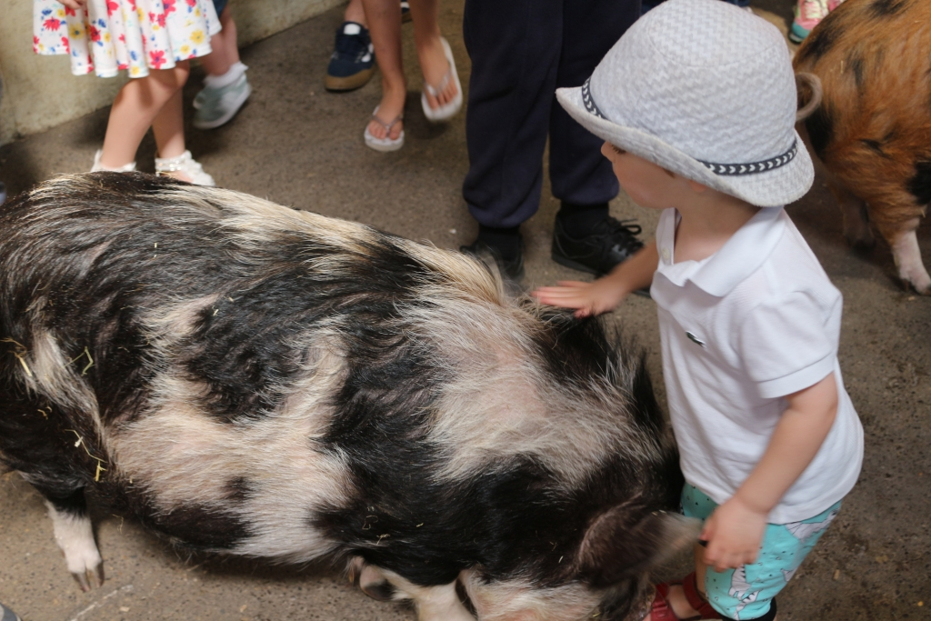 Staying in the New Forest with kids? Try meeting pigs at Farmer Palmer's