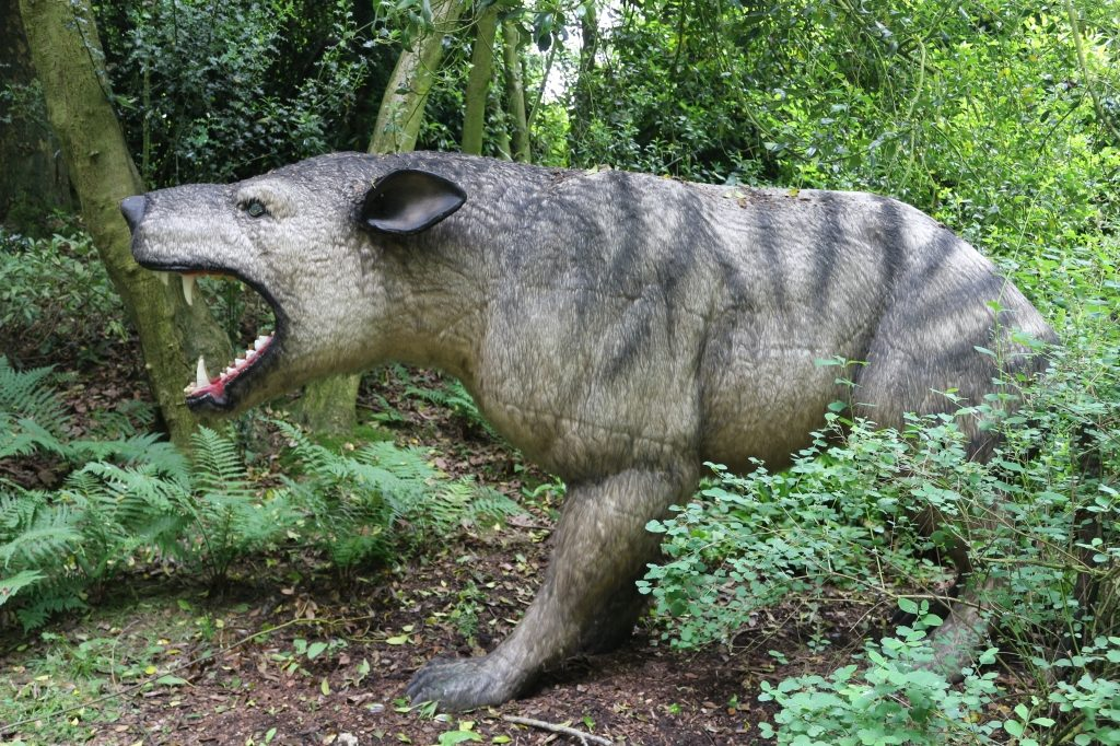Hyanenodon Gigas 'Giant Hyaena-Toothed' - Howletts Wild Animal Park Animals of the Ice Age