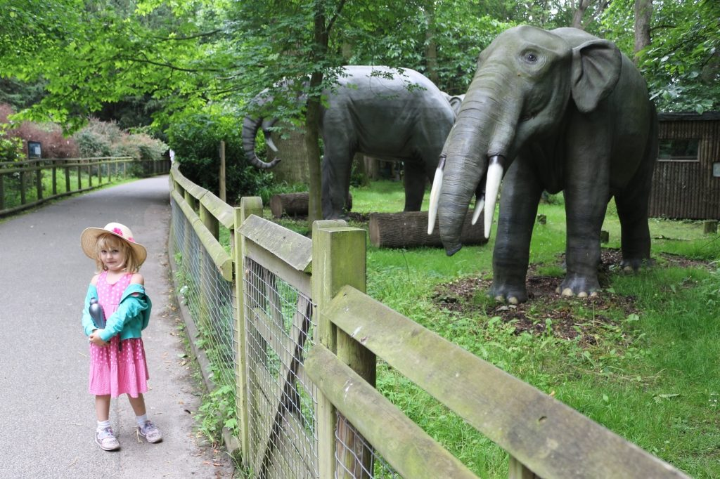 Gomphotherium 'Welded Beast' - Howletts Wild Animal Park Animals of the Ice Age (53)