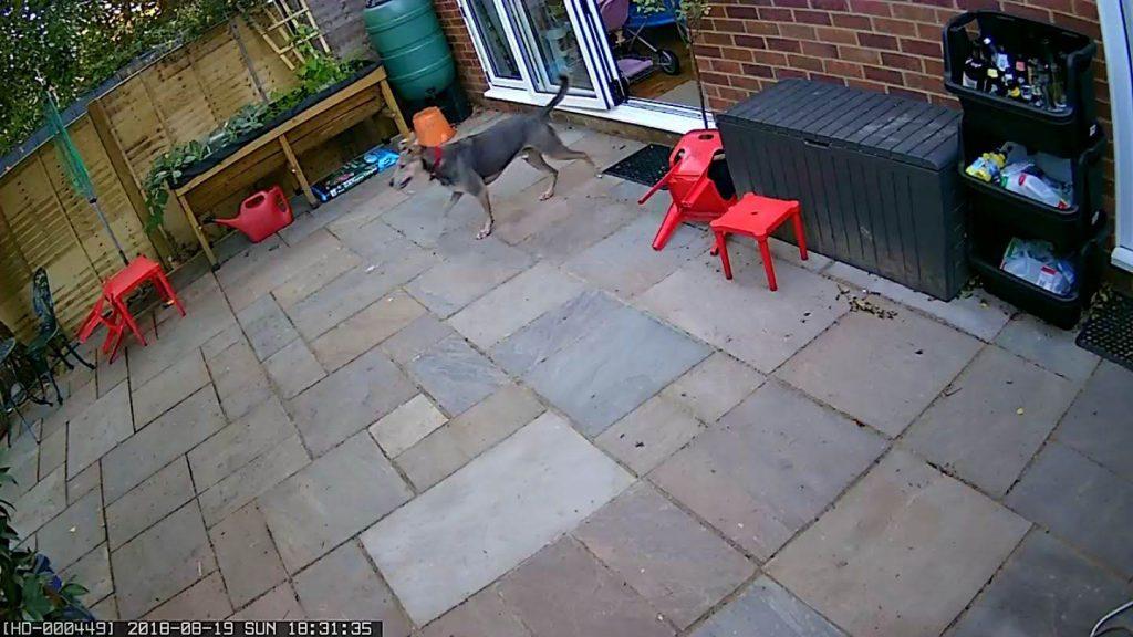 Security camera snapshot (Kodak) CCTV