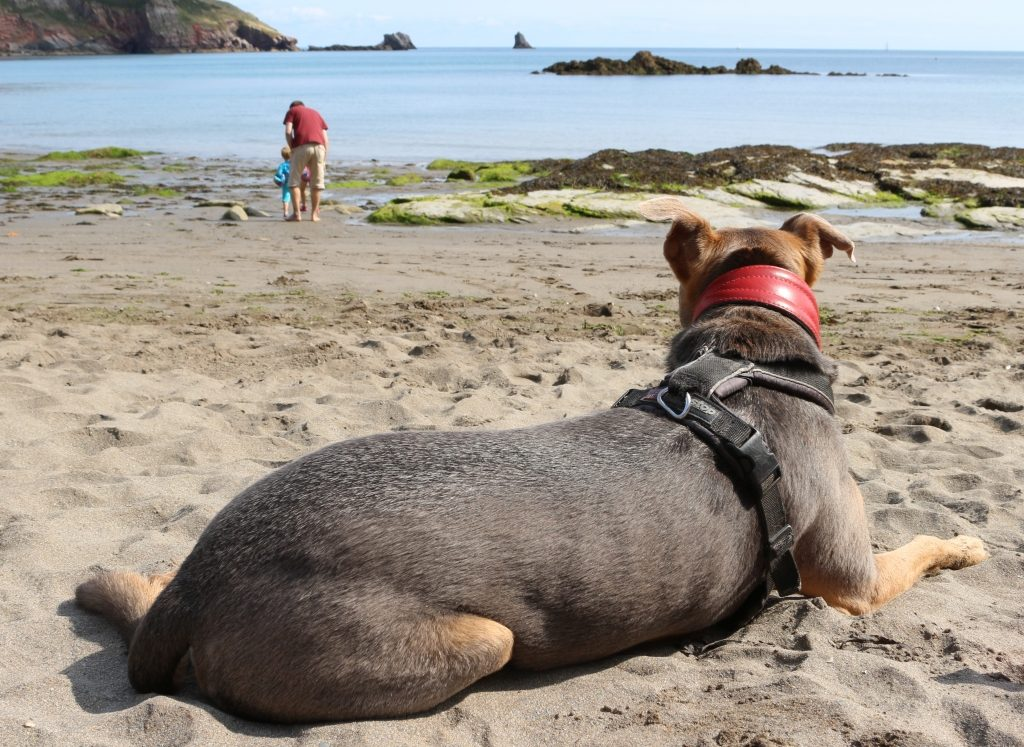 Dog friendly holiday - John Fowler South Bay Holiday Park Brixham Devon (194)