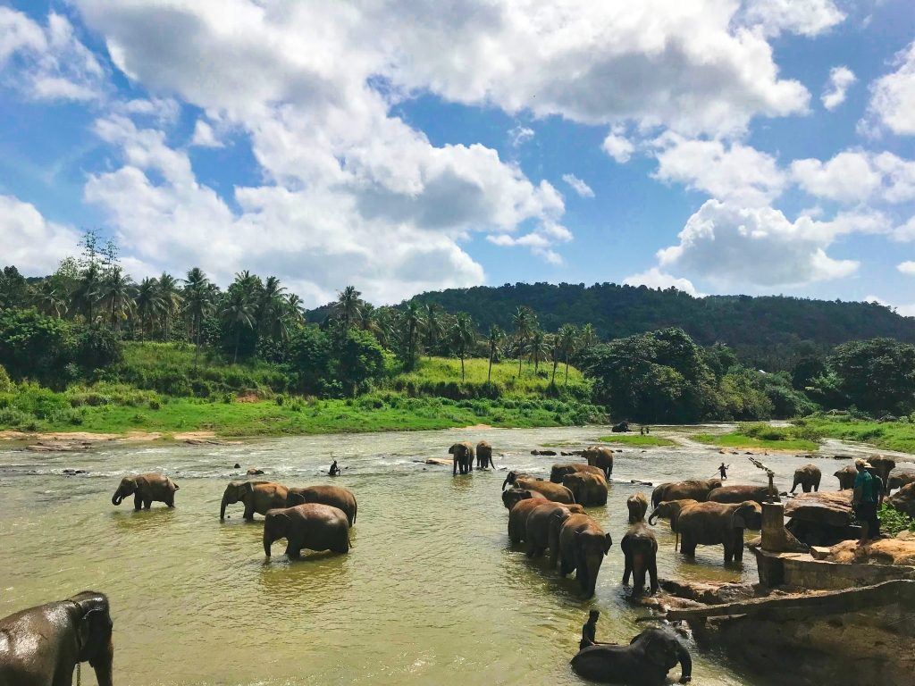 Elephants in Rambukkana, Sri Lanka via Unsplash