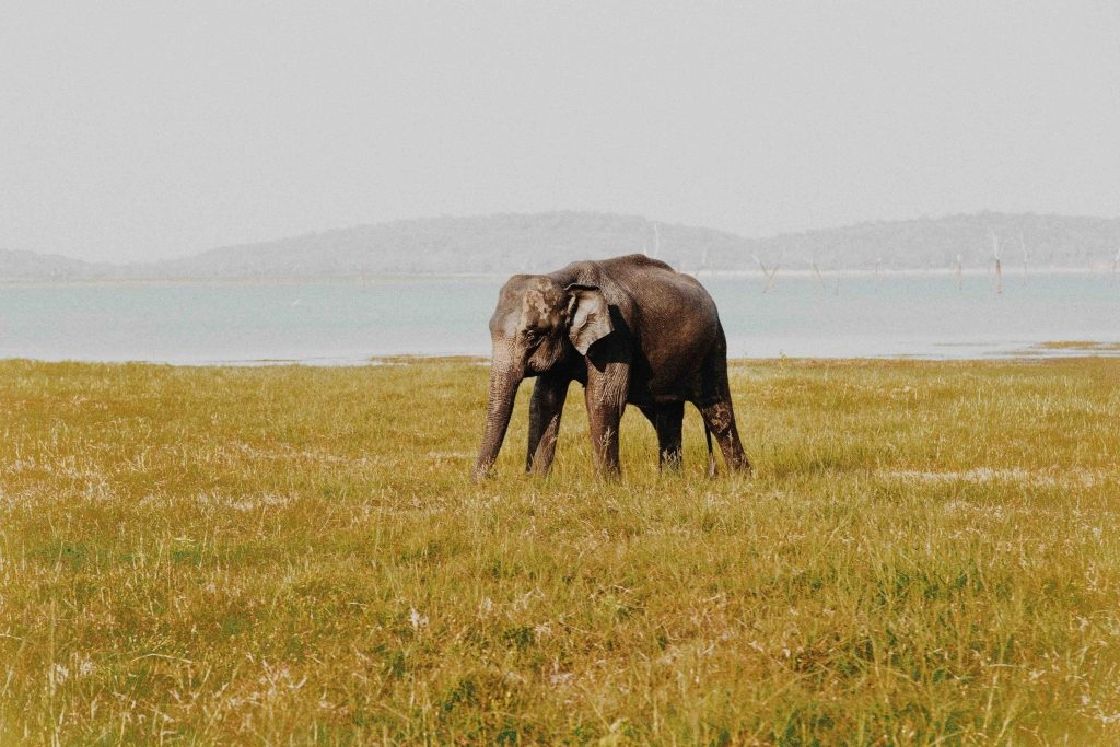 Elephants in Sri Lanka - things to do with children
